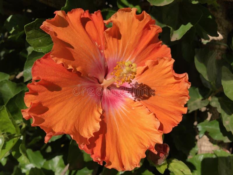 H?ngande blommor i h?rliga f?rger f?r en wintergarden arkivfoton