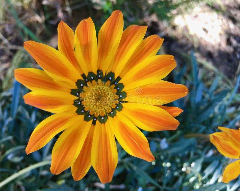 H?ngande blommor i h?rliga f?rger f?r en wintergarden royaltyfri foto
