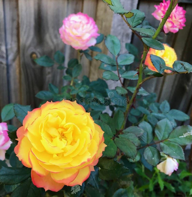 H?ngande blommor i h?rliga f?rger f?r en wintergarden royaltyfria bilder