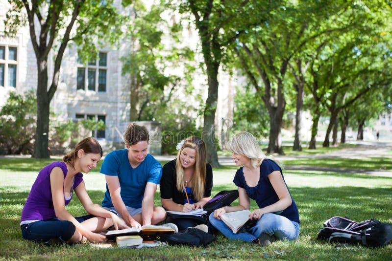högskolestudenter som tillsammans studerar royaltyfria foton