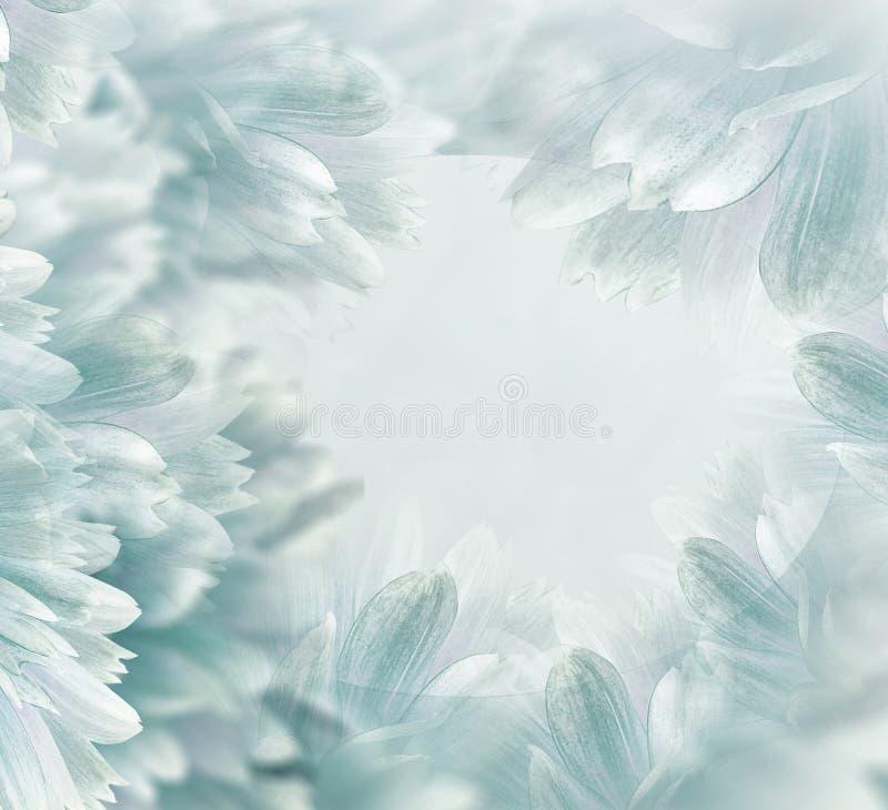 H?rlig bakgrund f?r blom- ljus turkos Blommor och kronblad av enr?d dahlia N?rbild vita tulpan f?r blomma f?r bakgrundssammans?tt arkivfoto