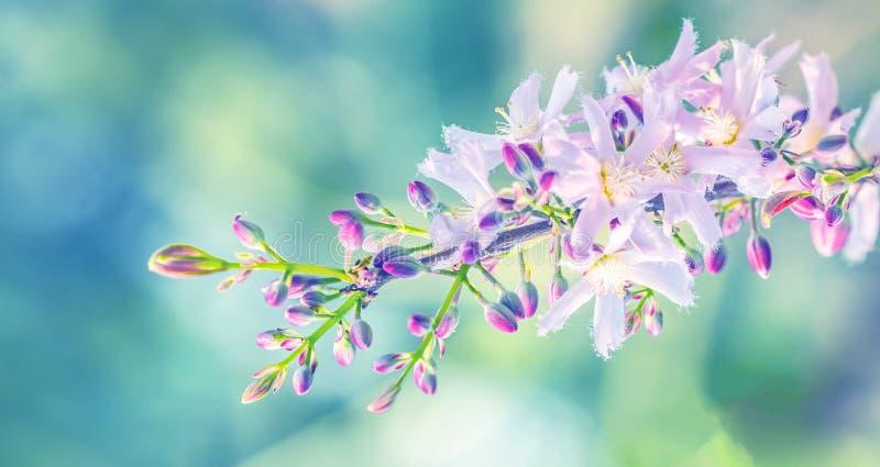 H?rlig blom- v?rabstrakt begreppbakgrund av naturen fotografering för bildbyråer