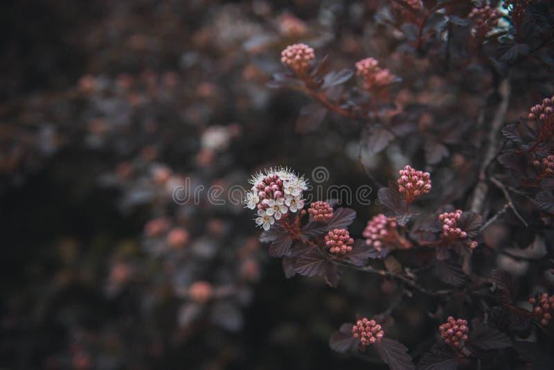 h?rlig blommafj?der fotografering för bildbyråer
