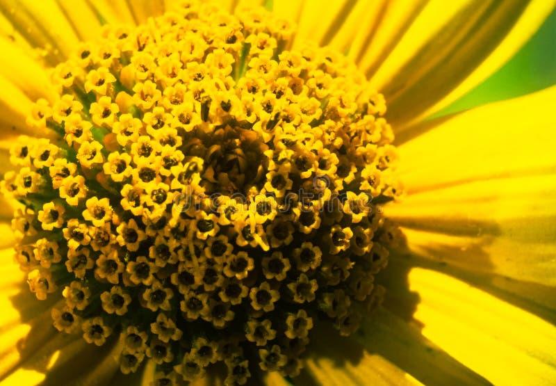 H?rlig blomman?rbild Liten blomma i makrofotografi Gul blomma royaltyfri fotografi