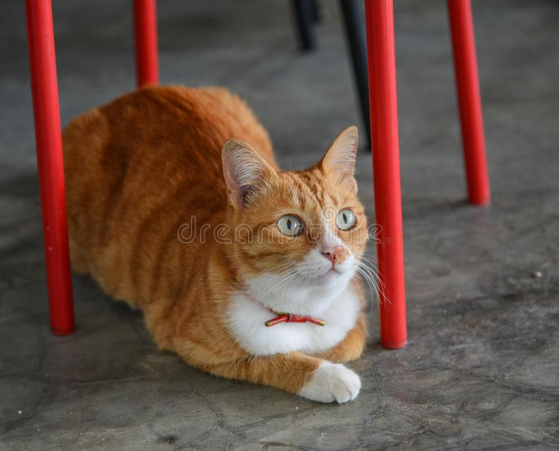 H?rlig brun katt fotografering för bildbyråer