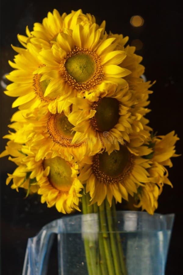 H?rlig bukett av gula blommor f?r varmt pollen av en omogen solrosn?rbild p? svart bakgrund, b?sta sikt, sommar, h?st, royaltyfri bild