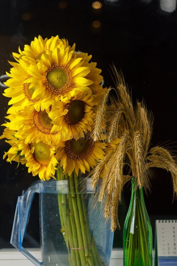 H?rlig bukett av gula blommor f?r varmt pollen av en omogen solrosn?rbild p? svart bakgrund, b?sta sikt, sommar, h?st, royaltyfria foton