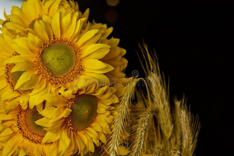 H?rlig bukett av gula blommor f?r varmt pollen av en omogen solrosn?rbild p? svart bakgrund, b?sta sikt, sommar, h?st, royaltyfri fotografi