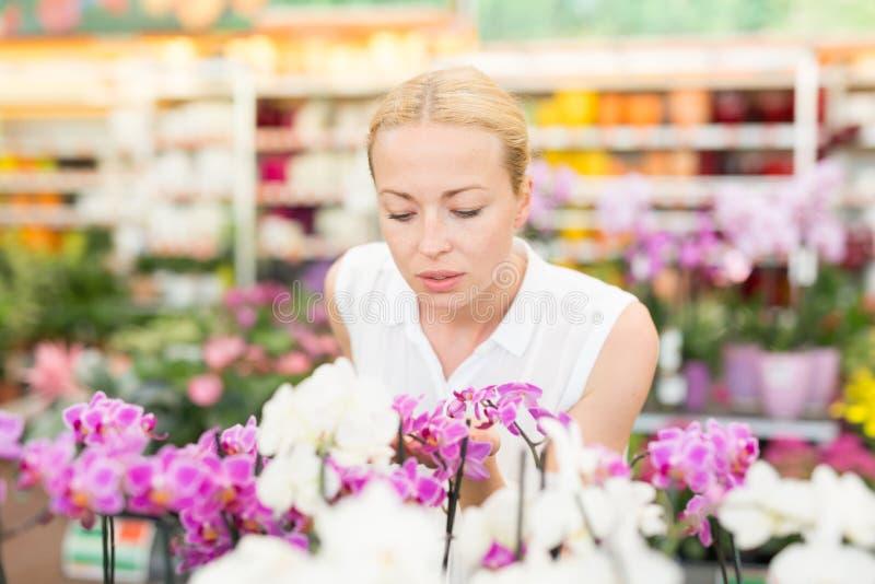H?rlig dam som luktar f?rgrika blommande orkid?r royaltyfria bilder
