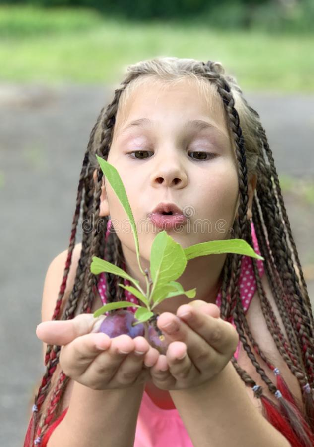 h?rlig flicka little En flicka med afrikanska råttsvansar äter plommoner arkivfoton