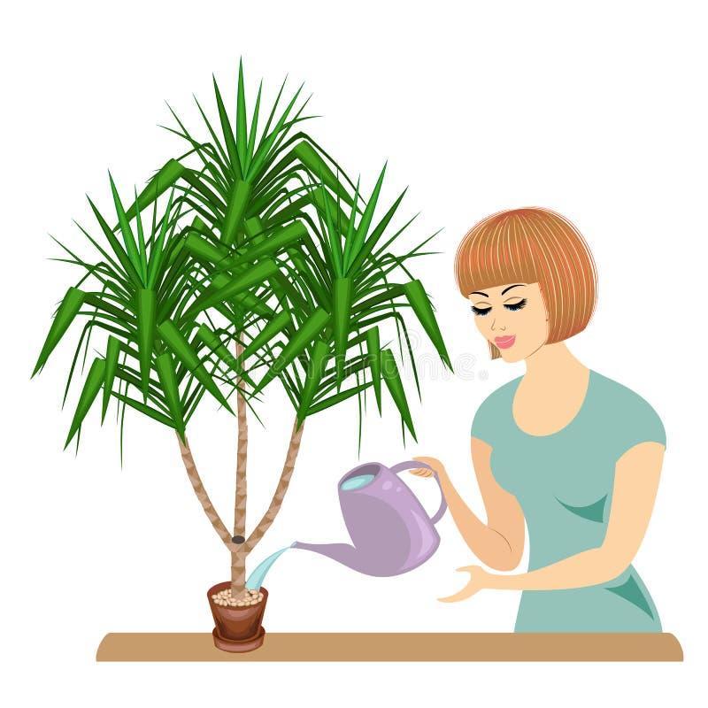 h?rlig flickaprofil Damen tar omsorg av växterna av rummet, kakturnas av palmliljan Kvinnan hällde dem ut vektor royaltyfri illustrationer