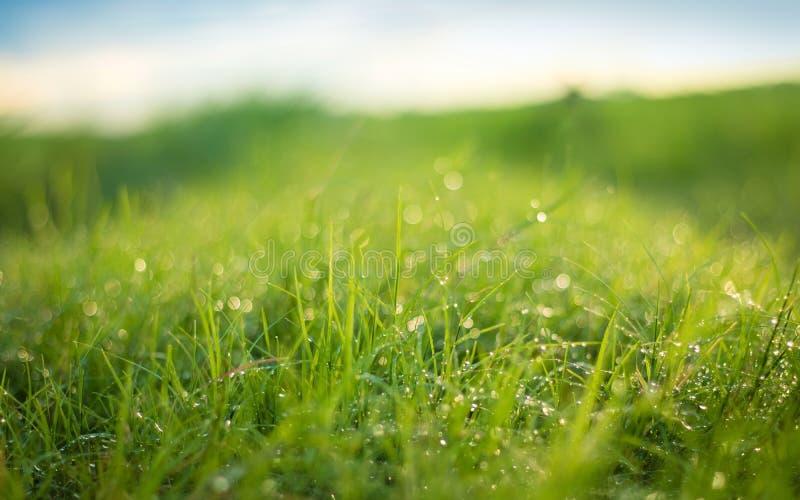 h?rlig gjord naturvektor f?r bakgrund Ny gräsplats och dagg i morgontid arkivbilder