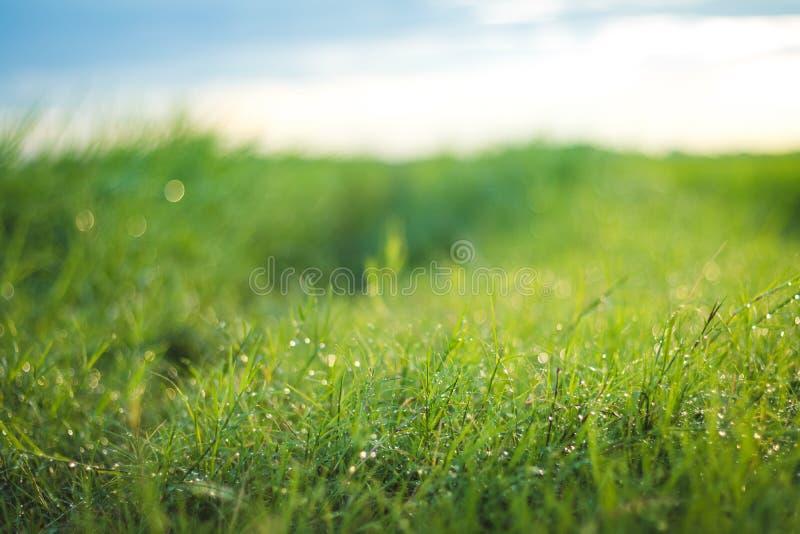 h?rlig gjord naturvektor f?r bakgrund Ny gräsplats och dagg i morgontid arkivfoto