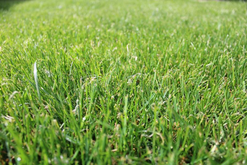 h?rlig gr?sgreen Närbild som skjutas på naturligt grönt gräs arkivbilder