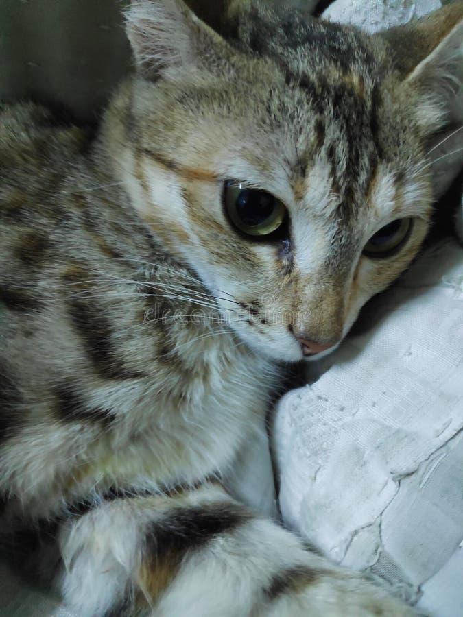 h?rlig katt fotografering för bildbyråer
