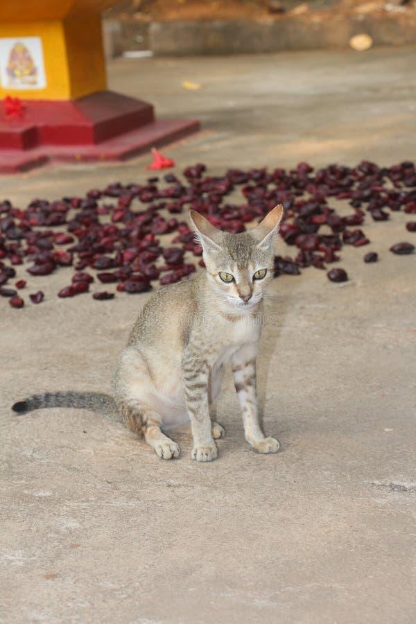 h?rlig katt royaltyfri fotografi