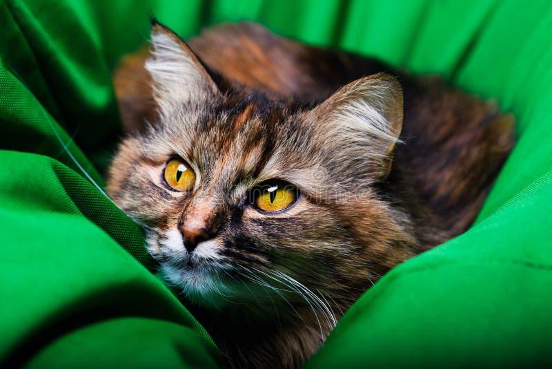 h?rlig kattst?ende arkivfoto
