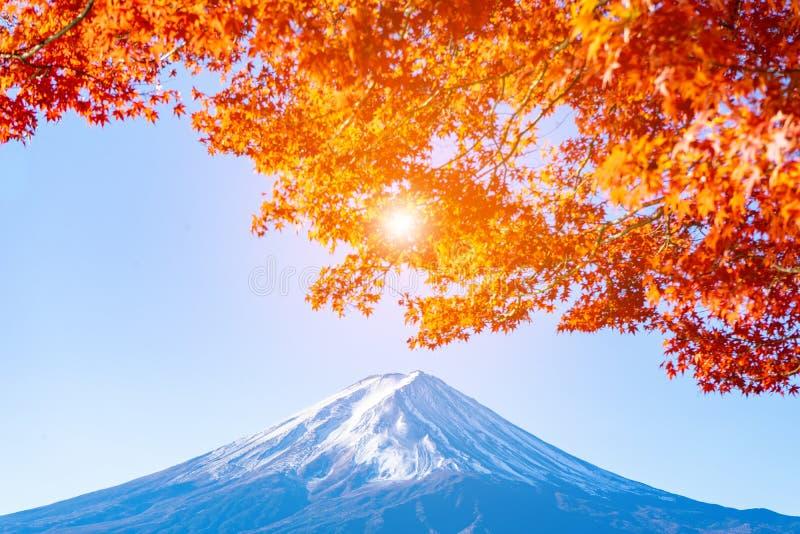 h?rlig kock? mt nya s?dra zealand Fuji med den röda lönnlövet i höst i Japan royaltyfria bilder
