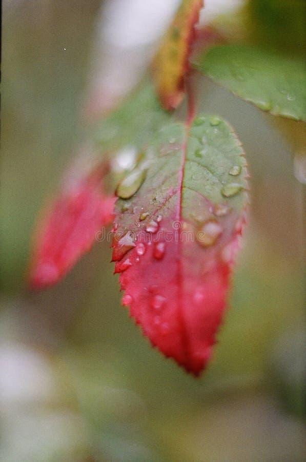 H?rlig leaf arkivfoto