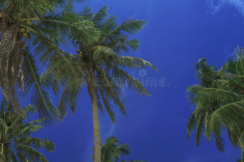 Härlig sky Sikten av trevligt tropiskt gömma i handflatan Ferie- och semesterbegrepp pÃ¥ Filippinerna pÃ¥ ön Siargao royaltyfri fotografi