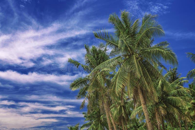 Härlig sky Sikten av trevligt tropiskt gömma i handflatan Ferie- och semesterbegrepp pÃ¥ Filippinerna pÃ¥ ön Siargao arkivfoton