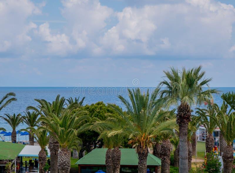 H?rlig tropisk kustlinje med palmtr?d och klart bl?tt vatten royaltyfri bild