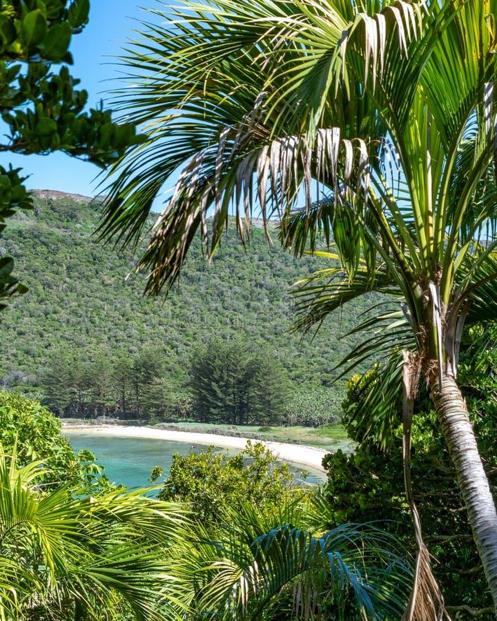 H?rlig tropisk ?sikt av den norr fj?rdstranden p? Lord Howe Island, New South Wales, Australien, sedd igenom subtropisk skog royaltyfria bilder