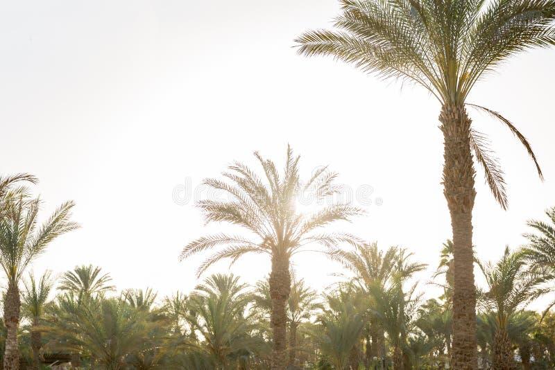 H?rlig tropisk solnedg?ng med palmtr?d p? stranden Effekttappning royaltyfri bild