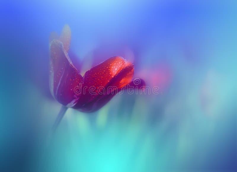 H?rlig v?rnaturbakgrund Gr?n naturlig tapet Blom- konst Sommar sol, ljus V?xt ekologi Nytt rent, rent R?d tulpan royaltyfria foton