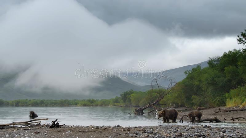 H?rliga berg av Kamchatka, f?glar av Kamchatka arkivbild