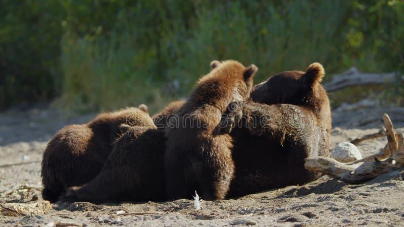 H?rliga berg av Kamchatka, f?glar av Kamchatka royaltyfri fotografi