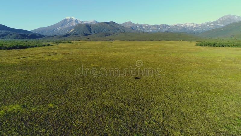 H?rliga berg av Kamchatka, f?glar av Kamchatka royaltyfria foton