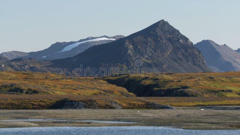 H?rliga berg av Kamchatka, f?glar av Kamchatka royaltyfria bilder