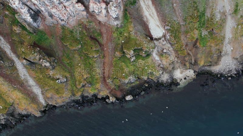 H?rliga berg av Kamchatka, f?glar av Kamchatka royaltyfri foto