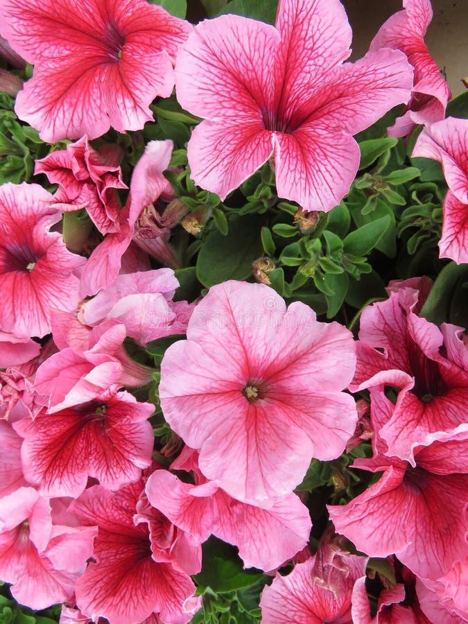 H?rliga blommor av intensiva f?rger och av stor sk?nhet royaltyfria foton