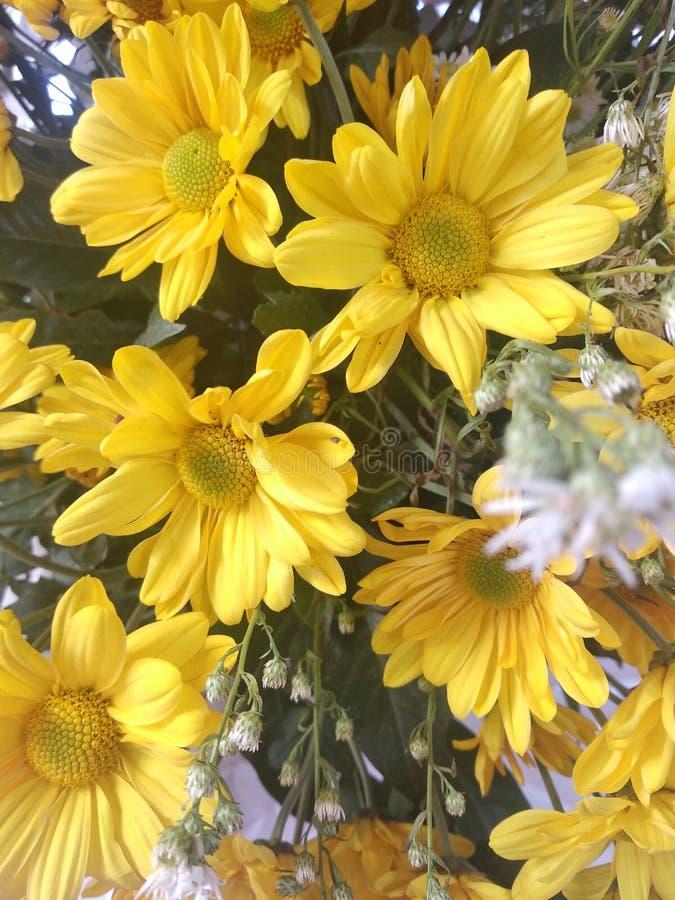 H?rliga blommor i morgonen arkivfoto