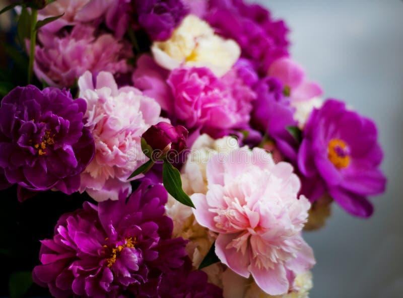 H?rliga blommor, pioner Elegant bukett av många pioner av slutet för rosa och röd färg upp fotografering för bildbyråer