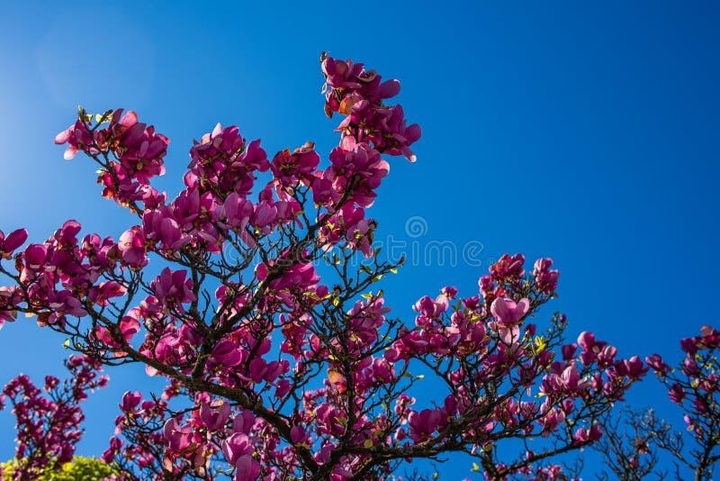 H?rliga rosa f?rgblommor fotografering för bildbyråer