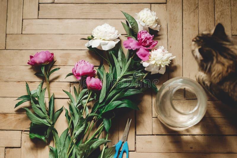 H?rliga rosa och vit pioner och katt p? lantligt tr?golv med den gammal exponeringsglaskruset och sax, b?sta sikt Blom- dekor och arkivbild