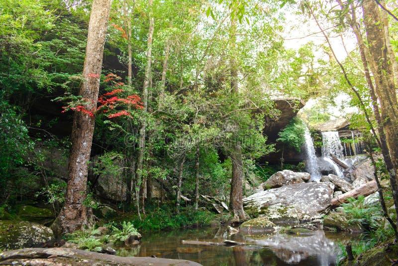 H?rliga tr?d f?r l?nn f?r skog och f?r blomning f?r landskapvattenfallgr?splan p? den Phu Kra Dueng nationalparken, Loei Thailand arkivbilder