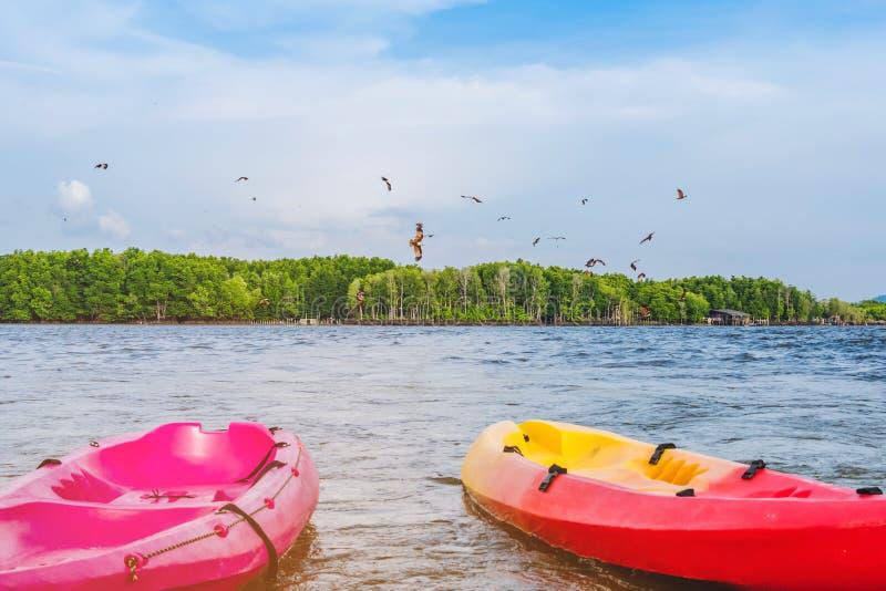 H?rligt landskap av de r?da h?karna, medan flyga f?r att finna mat med kajaker som sv?var i havet p? den sm?llChan byn Ingen-land royaltyfria bilder