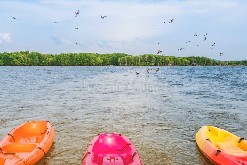 H?rligt landskap av de r?da h?karna, medan flyga f?r att finna mat med kajaker som sv?var i havet p? den sm?llChan byn Ingen-land royaltyfri bild