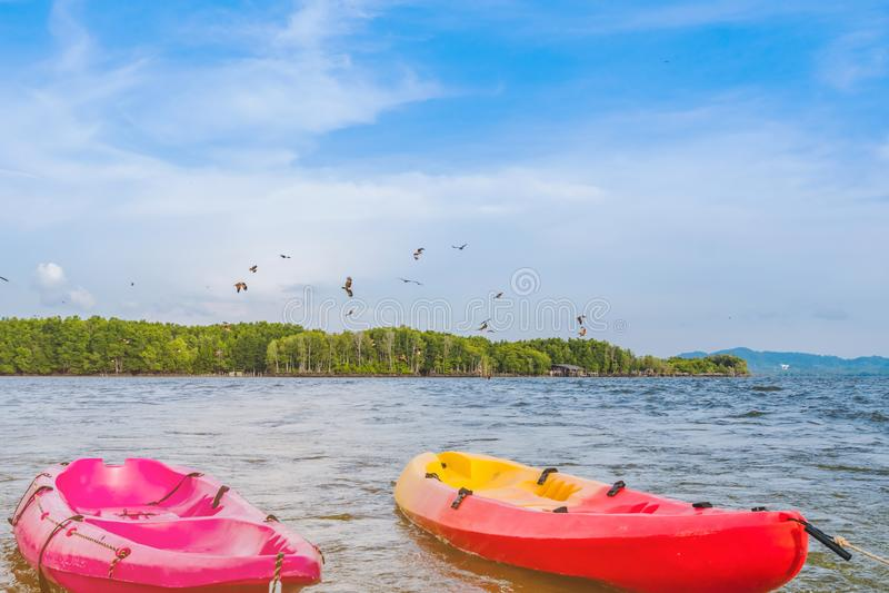 H?rligt landskap av de r?da h?karna, medan flyga f?r att finna mat med kajaker som sv?var i havet p? den sm?llChan byn Ingen-land royaltyfri fotografi