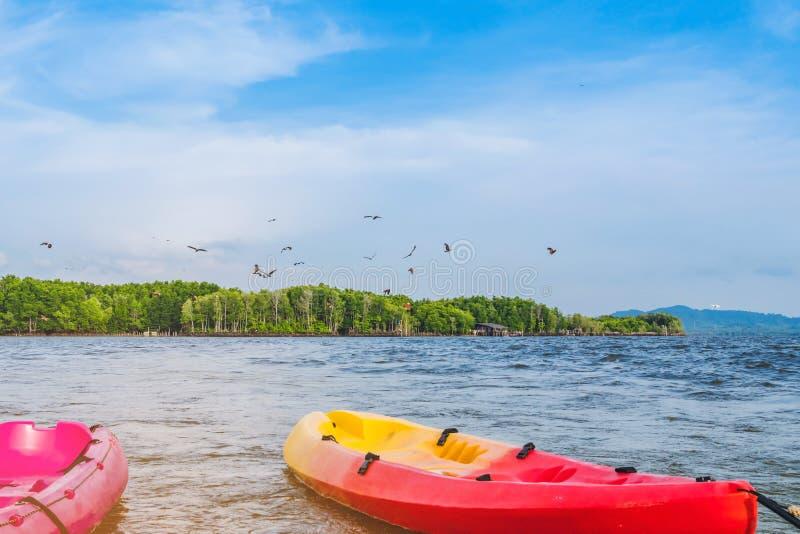H?rligt landskap av de r?da h?karna, medan flyga f?r att finna mat med kajaker som sv?var i havet p? den sm?llChan byn Ingen-land arkivfoto