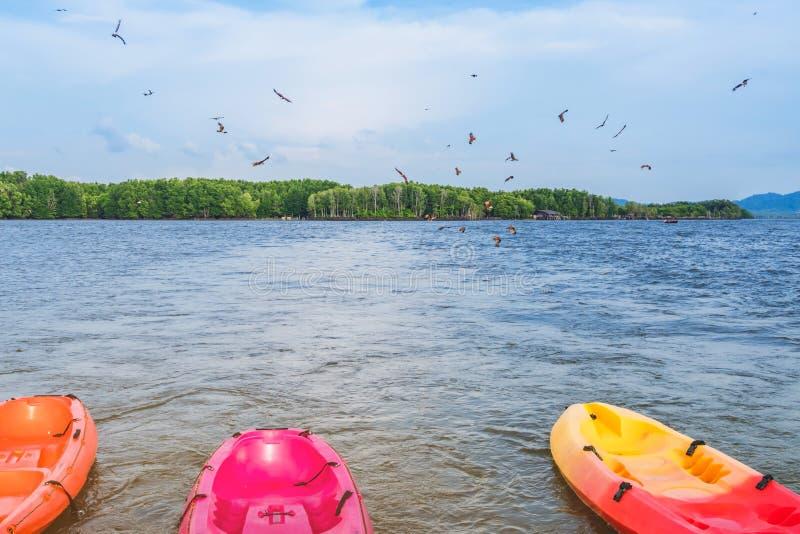 H?rligt landskap av de r?da h?karna, medan flyga f?r att finna mat med kajaker som sv?var i havet p? den sm?llChan byn Ingen-land fotografering för bildbyråer