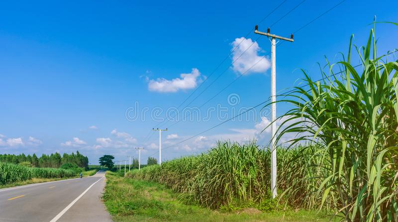 H?rligt landskap av sockerr?rtillv?xt i lantg?rd n?ra de lantliga v?garna arkivbilder