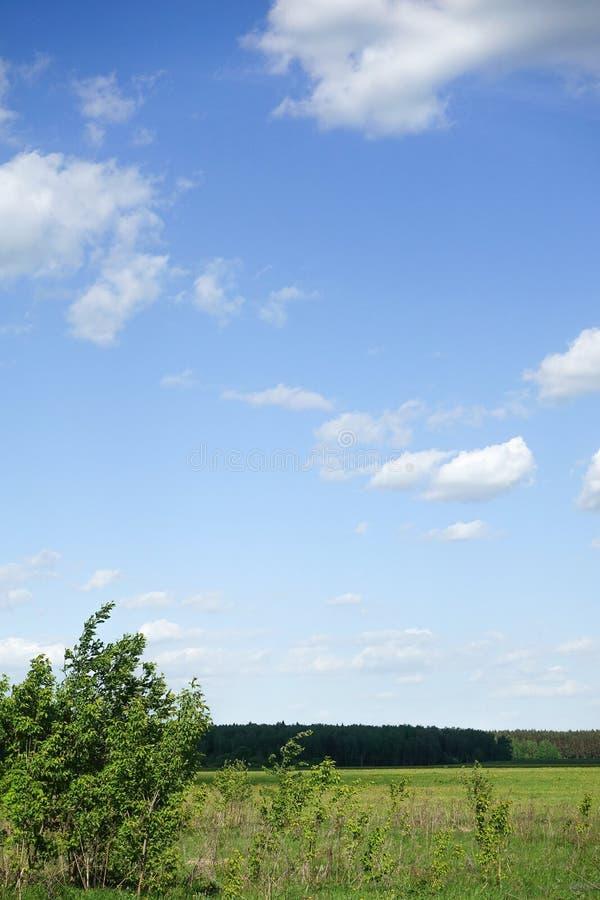 H?rligt landskap F?lt f?r gr?nt gr?s och bl? himmel med vita moln royaltyfria bilder