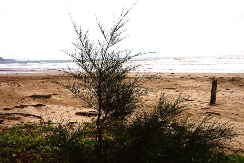 h?rligt landskap f?r strand arkivfoton