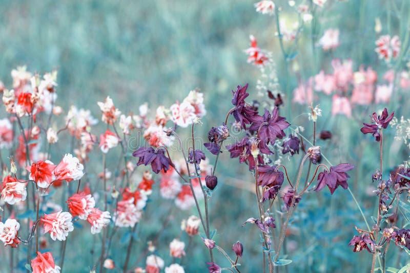 H?rligt ?ngf?lt med l?sa blommor V?r eller sommarvildblommacloseup bakgrund suddighetdde den skyddande pillen f?r maskeringen f?r fotografering för bildbyråer