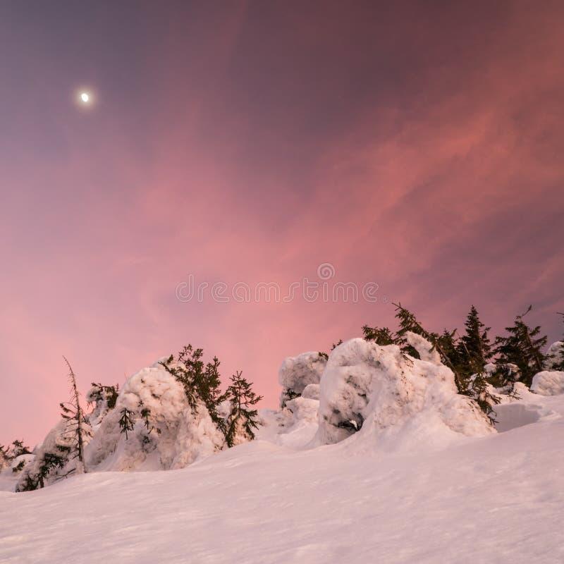 H?rligt vinterlandskap i berg p? solig ljus dag, med tr?d som t?ckas med enormt belopp av sn? med att f?rbluffa former arkivfoto